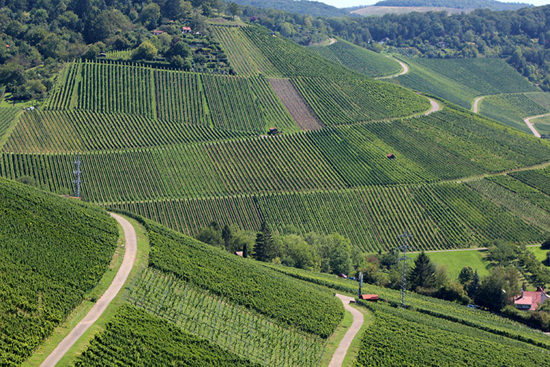 wineyards in stuttgart tours